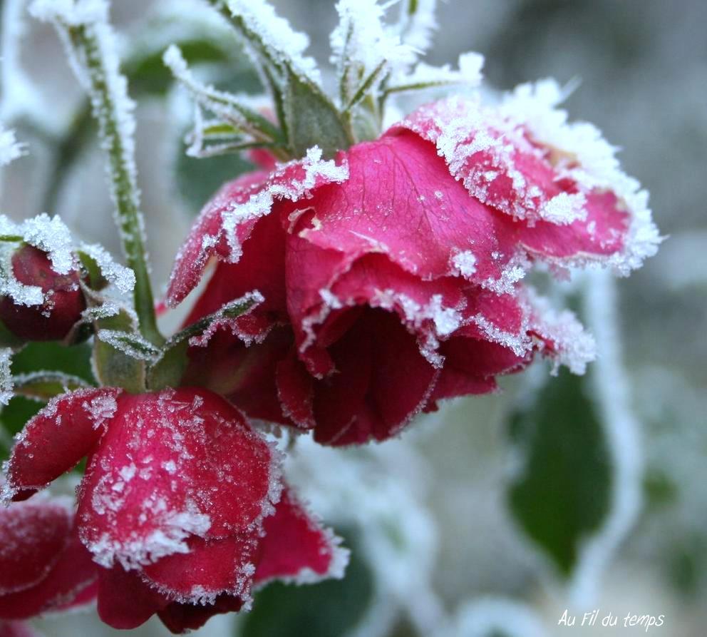 Premi re gel e premi re neige l hiver frappe notre - C est l hiver qui frappe a notre porte ...